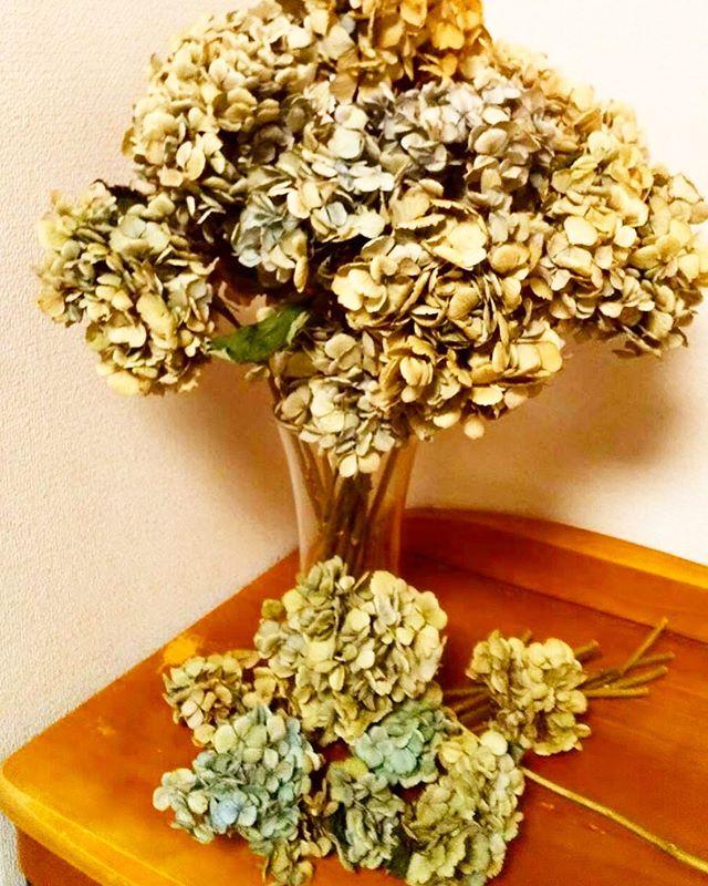 ・今年できた紫陽花のドライフラワーです・紫陽花のドライフラワーは風水的に、婦人科疾患に効果があるとか!・ナオエ夢鍼灸院には紫陽花のドライフラワーをたくさん飾っています全て せつこ先生の手作り・【ご予約・お問い合わせ】#ナオエ夢鍼灸院( #滋賀 #近江八幡 )℡0748-32-1172.#鍼灸 #不妊治療 #不妊 #赤ちゃんがほしい #滋賀妊活 #ベビ待ち #赤ちゃん待ち #コウノトリ #ゆりかご #ママになりたい #妊活記録 #妊娠検査薬 #タイミング #顕微授精 #人工授精 #体外受精 #凍結 #2人目不妊 #採卵 #移植 #採卵周期 #妊活アカウント #不妊治療記録 #紫陽花 #ドライフラワー #ドライフラワーのある暮らし #婦人科疾患